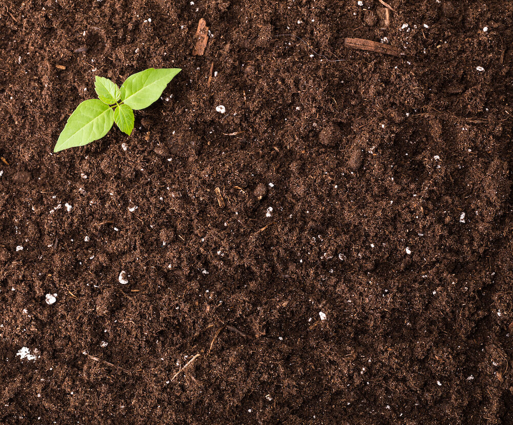 planting trees in sustainable soil