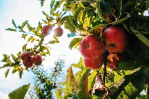 tree maintenance 2 | Augusta Pro Tree Services