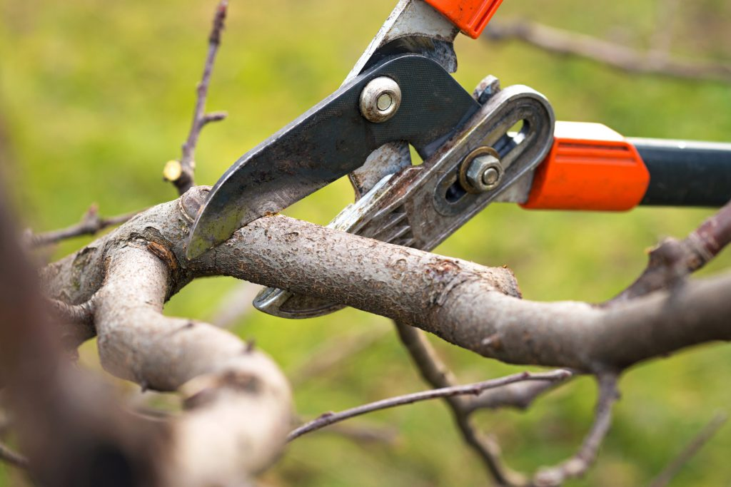 when do you prune trees