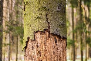 tree bark diseases
